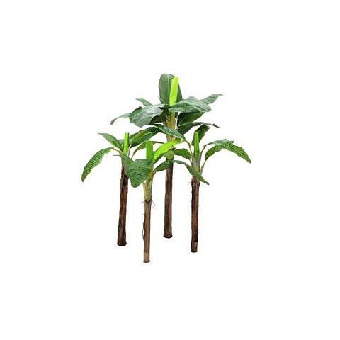 Europalms Bananenbaum Set, 4-stämmig