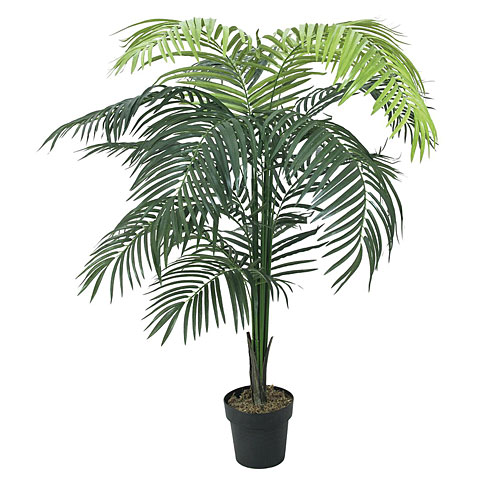 Europalms Areca Palme, Großblatt